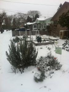 View of winter garden