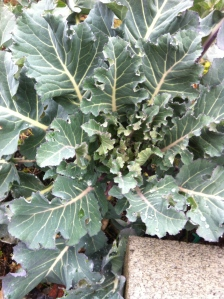 Hopefully this winter broccoli will have something for us in spring.